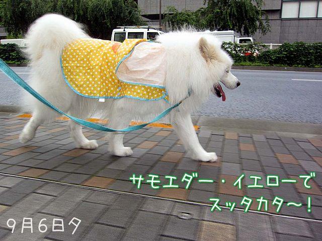 いつものお散歩_c0062832_703590.jpg