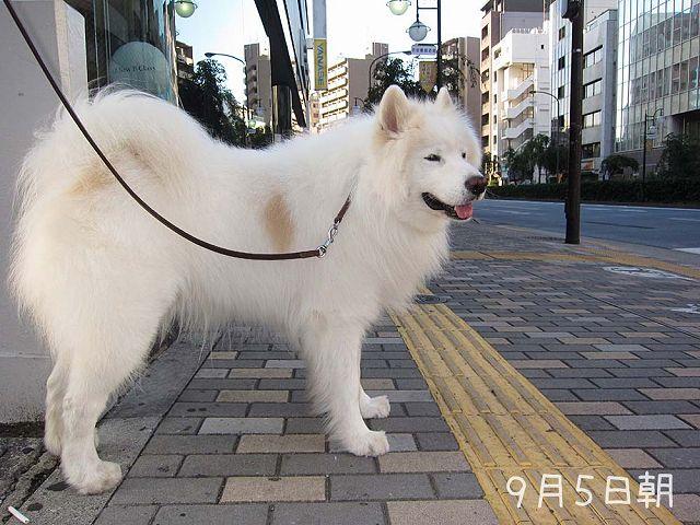 いつものお散歩_c0062832_70960.jpg