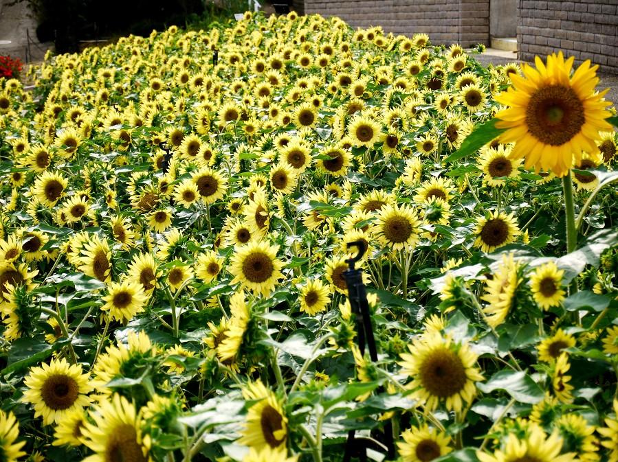 和歌山県植物公園緑花センター _b0093754_2313817.jpg