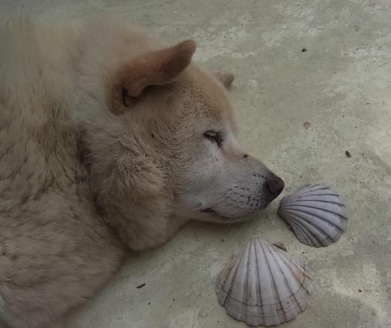 山の犬、海の夢_c0113755_23362910.jpg