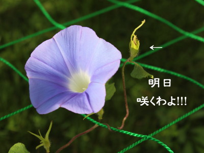 b0158061_212855.jpg