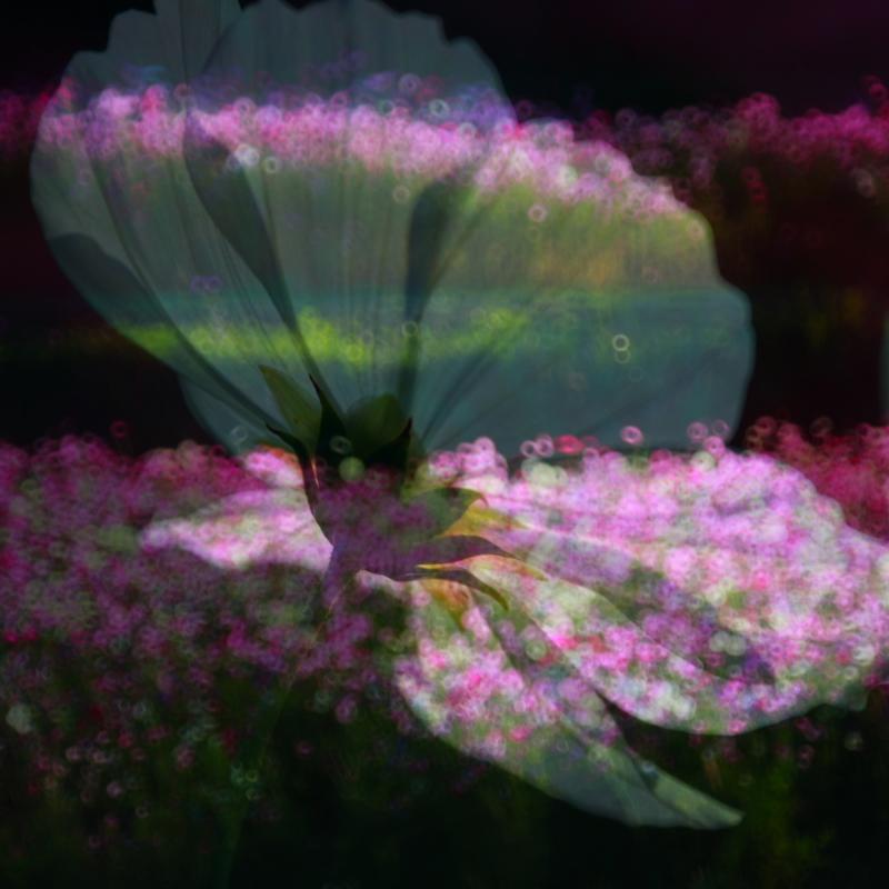 f0215969_8104326.jpg
