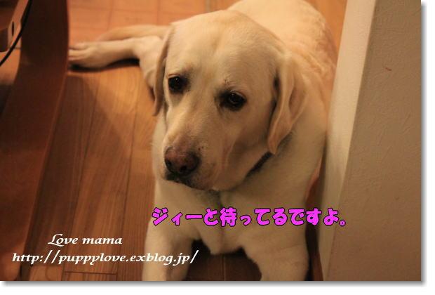 b0136683_917888.jpg