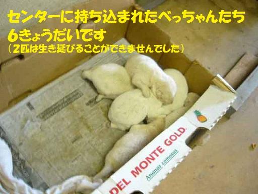 f0121712_13235126.jpg