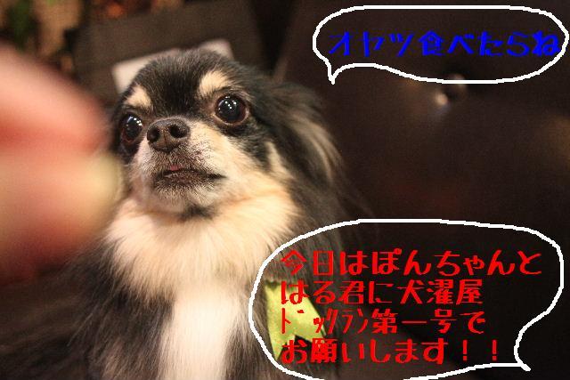 第一号!!_b0130018_22415922.jpg
