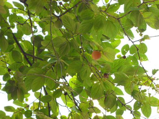 夏から秋へ_e0135219_1023574.jpg