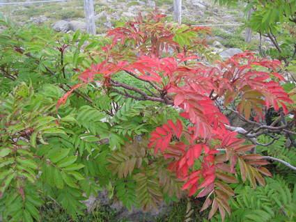 初秋の風景_a0057828_2027218.jpg