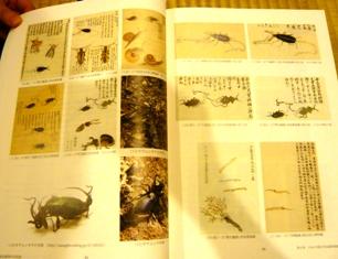 冬虫夏草の文化誌_e0230141_12595042.jpg