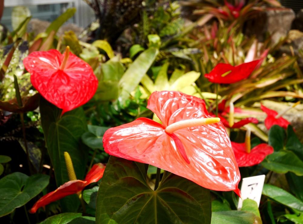 和歌山県植物公園緑花センター _b0093754_22275797.jpg