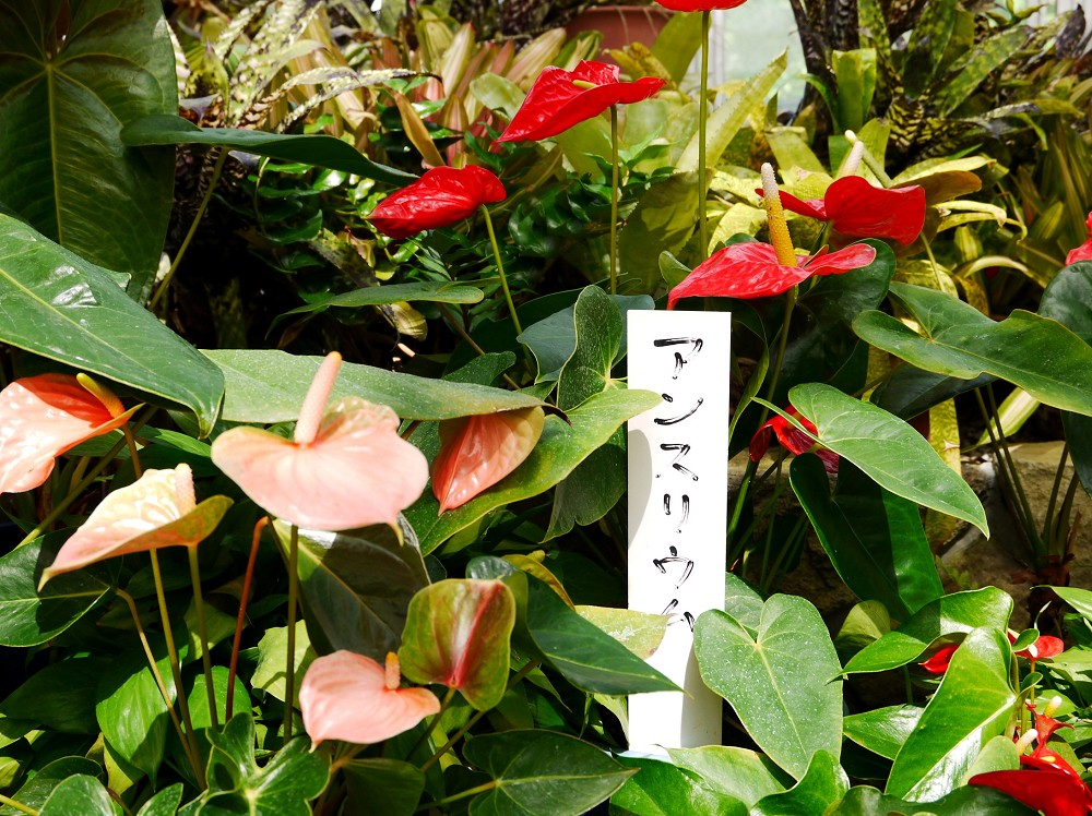 和歌山県植物公園緑花センター _b0093754_2228348.jpg