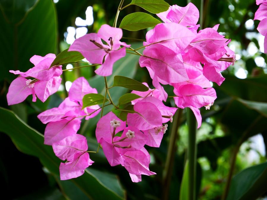 和歌山県植物公園緑花センター _b0093754_22292438.jpg