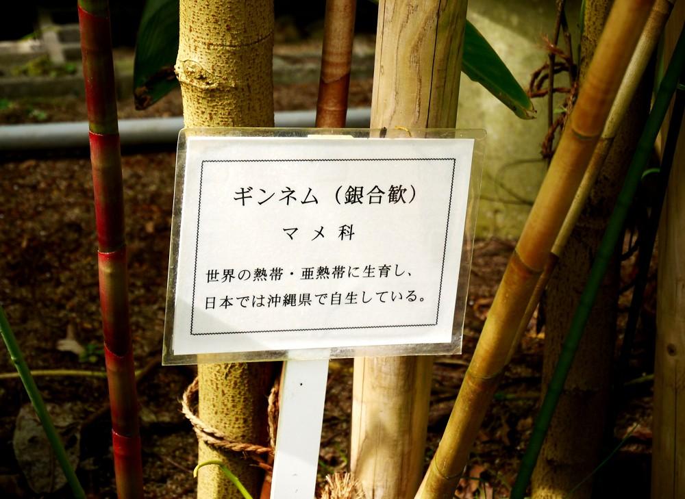和歌山県植物公園緑花センター _b0093754_2229740.jpg
