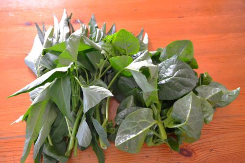 キャベツ、白菜の苗を定植しました。_c0053863_2355471.jpg