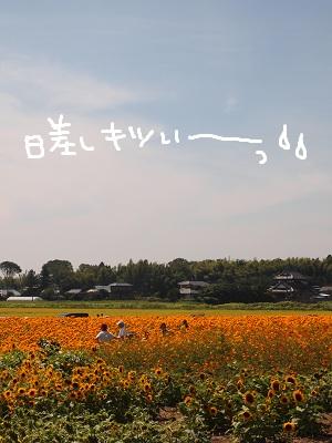 b0092580_335048.jpg