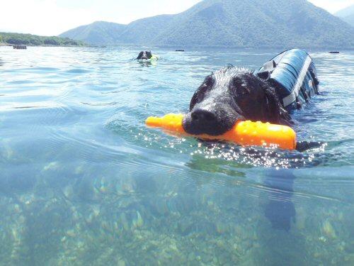この夏は水泳三昧_c0050400_1754718.jpg
