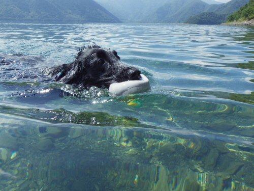 この夏は水泳三昧_c0050400_1829449.jpg