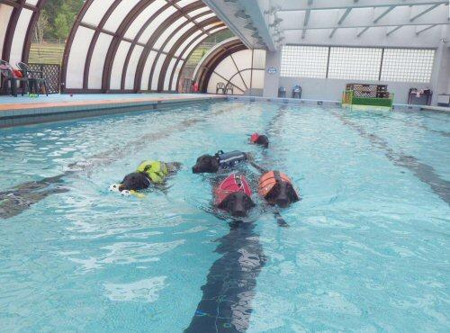 この夏は水泳三昧_c0050400_19121553.jpg