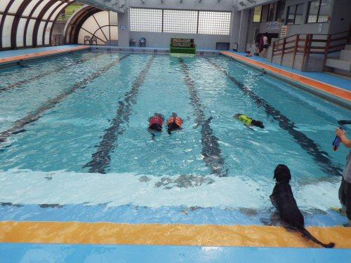 この夏は水泳三昧_c0050400_19122795.jpg