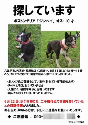 飼い犬が「迷い犬」になってしまったら、すぐにやること。_b0027203_1551492.jpg