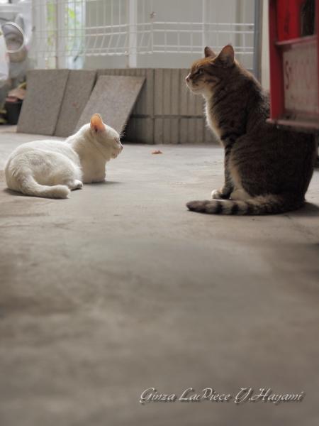 風景の写真 猫のいる風景 _b0133053_23344063.jpg