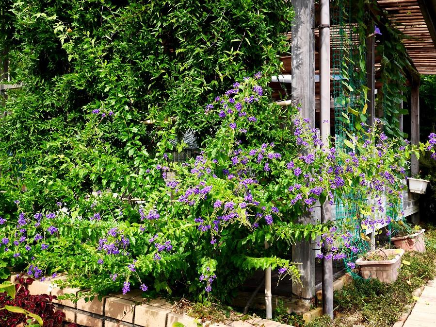 和歌山県植物公園緑花センター _b0093754_22182223.jpg
