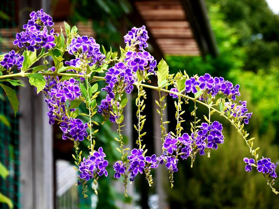 和歌山県植物公園緑花センター _b0093754_22184718.jpg
