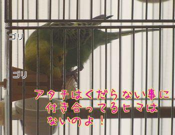 f0196665_910524.jpg