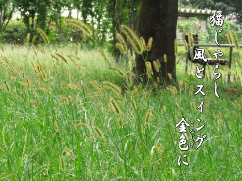 f0137096_1413231.jpg