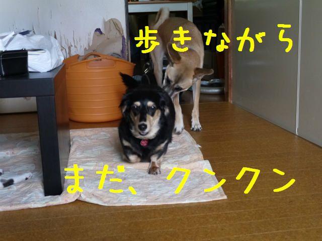 f0218911_9412840.jpg
