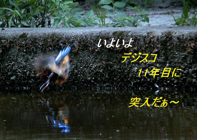 a0104116_17503858.jpg