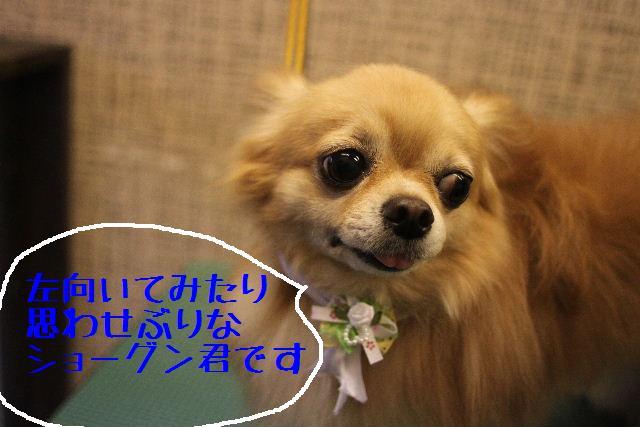 うまいじゃぁ~ん!_b0130018_020456.jpg