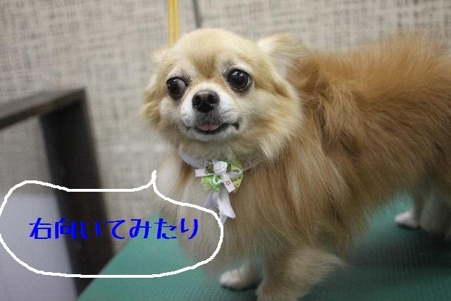 うまいじゃぁ~ん!_b0130018_0205236.jpg