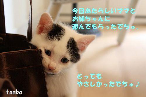 f0063729_126467.jpg