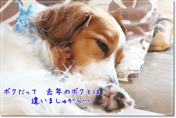 d0013149_22492114.jpg