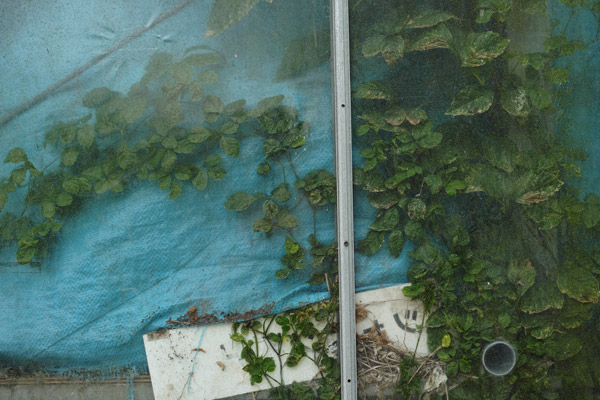 2012/09/10 菊名から綱島まで_b0171364_10111068.jpg