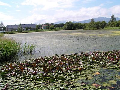 札幌の湿地・東屯田川遊水池_f0078286_9334034.jpg