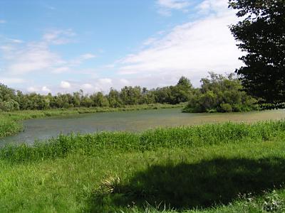 札幌の湿地・東屯田川遊水池_f0078286_9342435.jpg