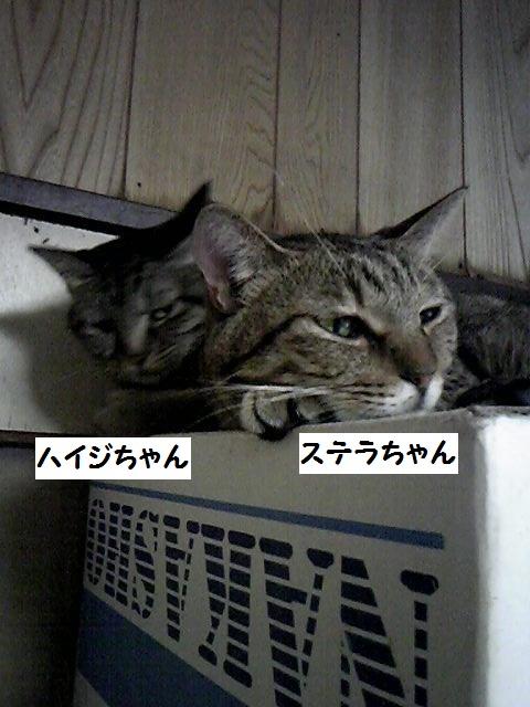 a0232197_19312175.jpg