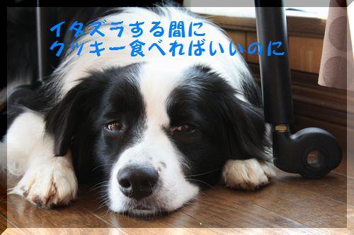 d0224111_20131359.jpg