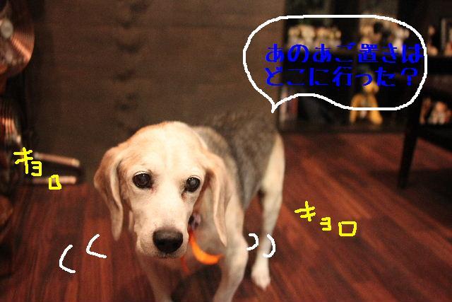 今日と明日はお休みで~す!!_b0130018_842780.jpg