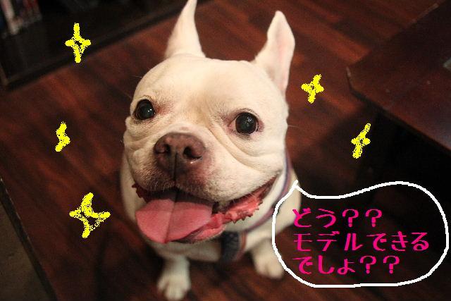 今日と明日はお休みで~す!!_b0130018_8454180.jpg