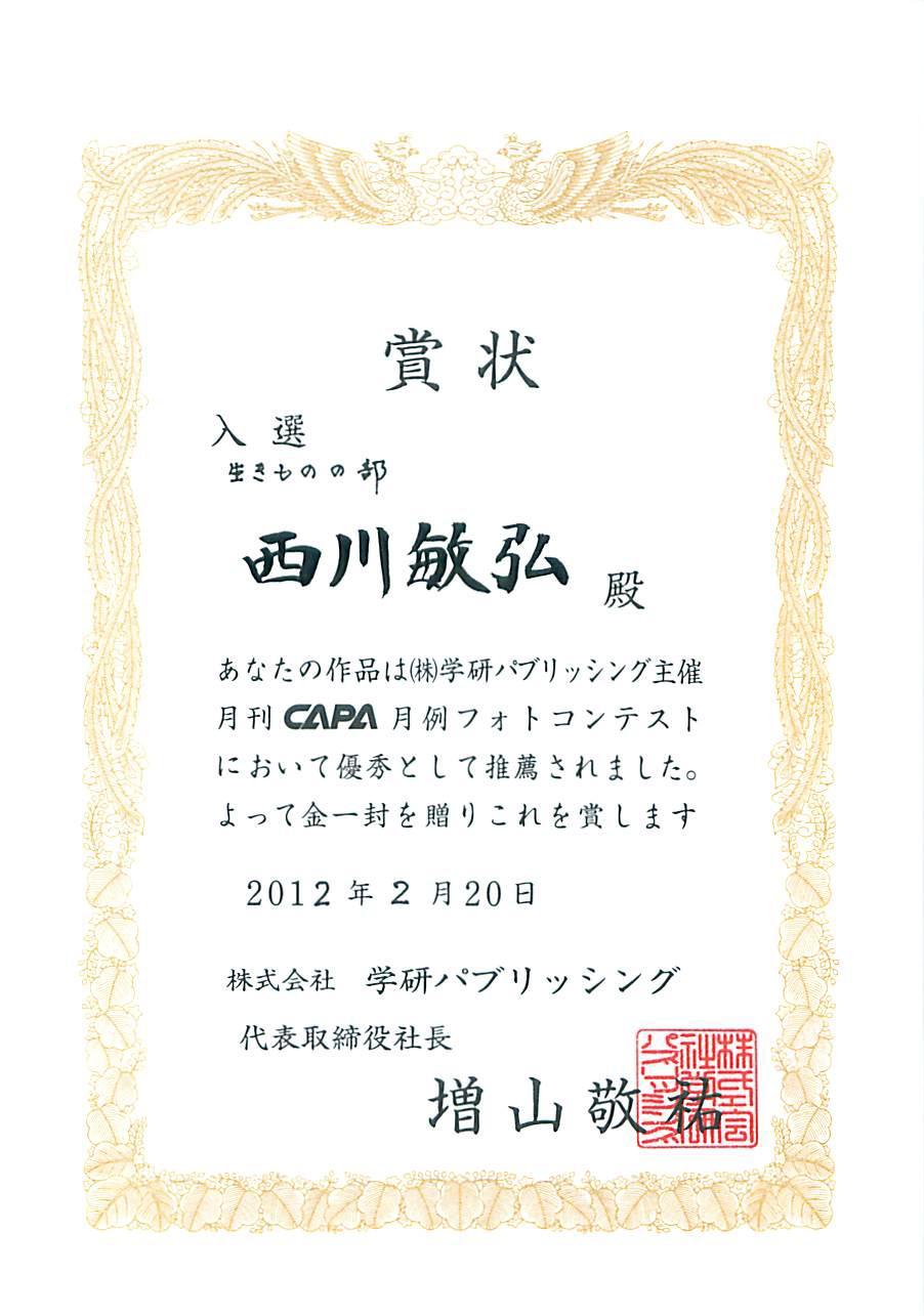 雑誌「CAPA」月例フォトコンテスト 2012年3月号 いきものの部入選「低空飛行」 _a0288226_053981.jpg