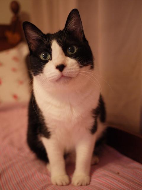 猫じゃない猫 空編。_a0143140_21274913.jpg