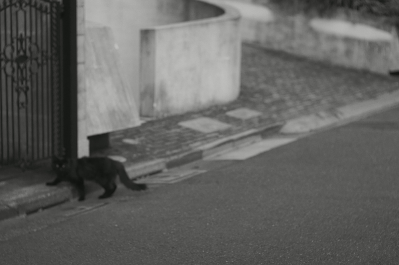 渋谷の猫、その8。_c0120903_0525548.jpg