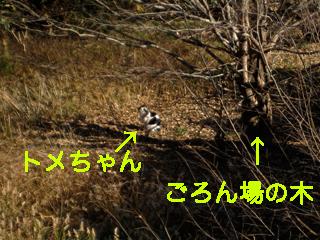 c0211810_945089.jpg