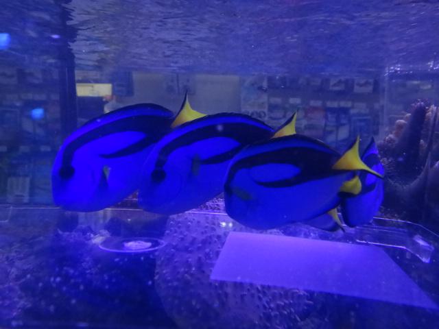120912 海水魚・水草・淡水魚・金魚_f0189122_12475313.jpg