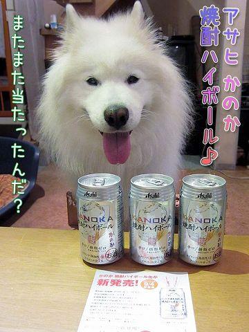 タダ酒2連発!_c0062832_8385527.jpg