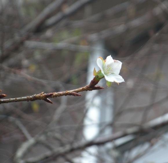 秋桜と言えば・・・コスモスのことですが・・・・・_a0114743_13321380.jpg