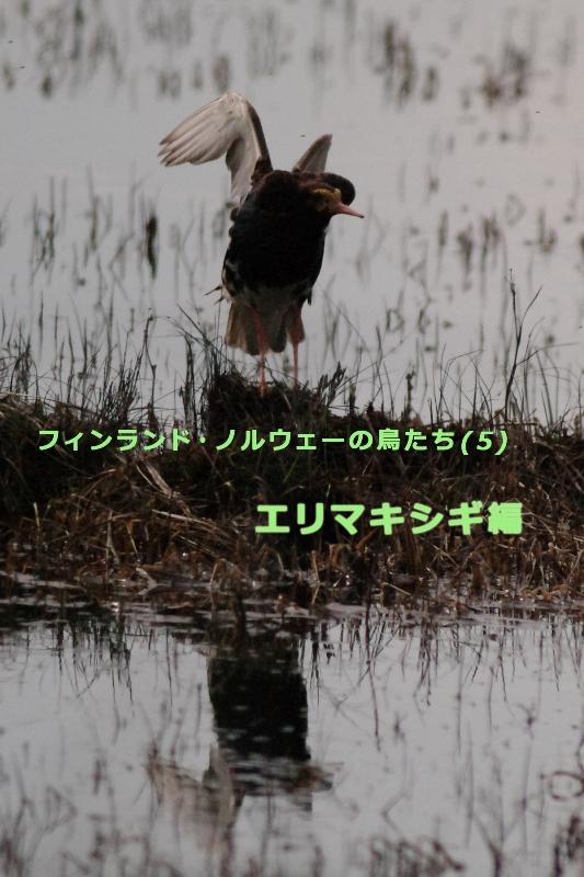 b0144049_16371630.jpg