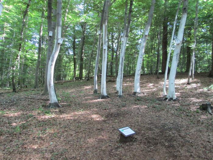 ダルムシュタット165−WALD  KUNST 森の展覧会2_c0100195_583297.jpg